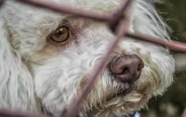 dog-91237_1280