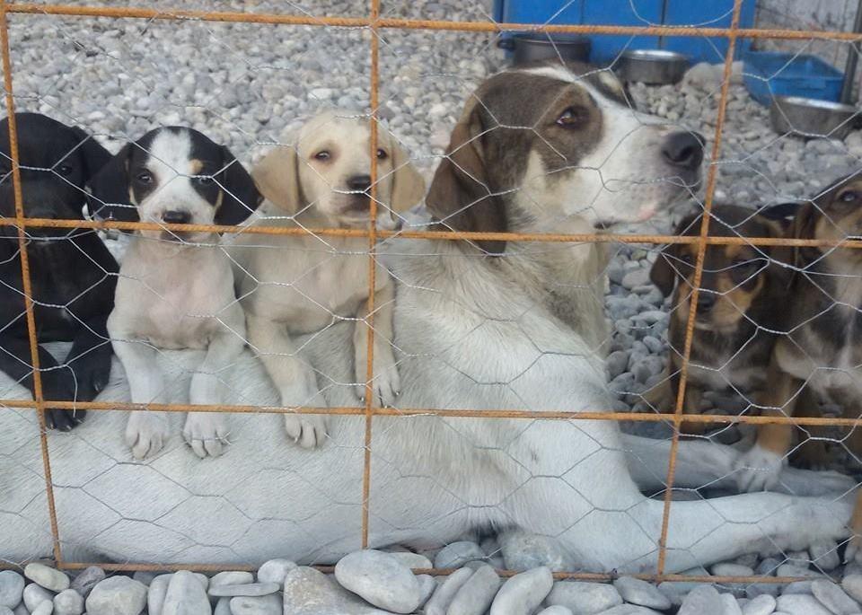 Aktion SCHUTZENGEL – Hilfe für das Tierasyl Šapice Čapljina